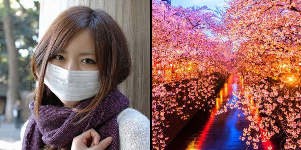 Japan cancels sakura festival News Asia Today