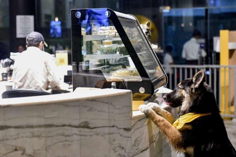 Saudi Arabia has its first dog cafe 62