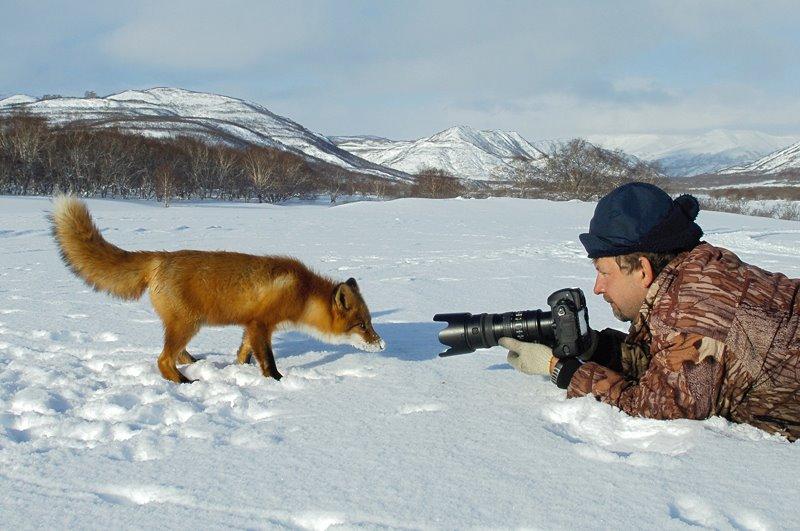 Tree-hugging Tiger photo in Russia wins wildlife photo award 69