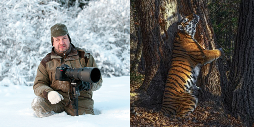 Tree-hugging Tiger photo in Russia wins wildlife photo award 85