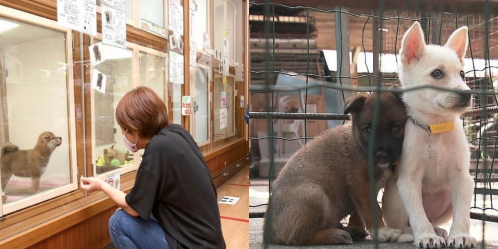 People in Japan buying more pets but abandoned more of them during covid 97