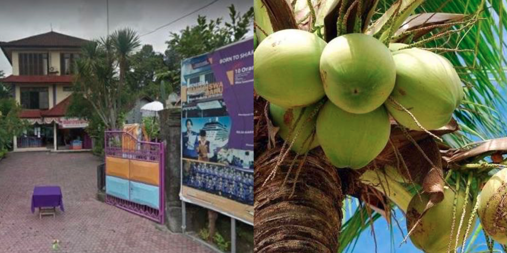 School in Bali, Indonesia allows students use coconuts to pay tuition fees 97