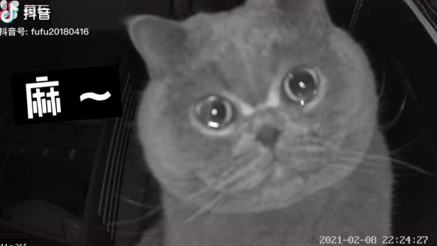 "Pet cat Fu Fu caught ""crying"" into home camera after being home alone 68"
