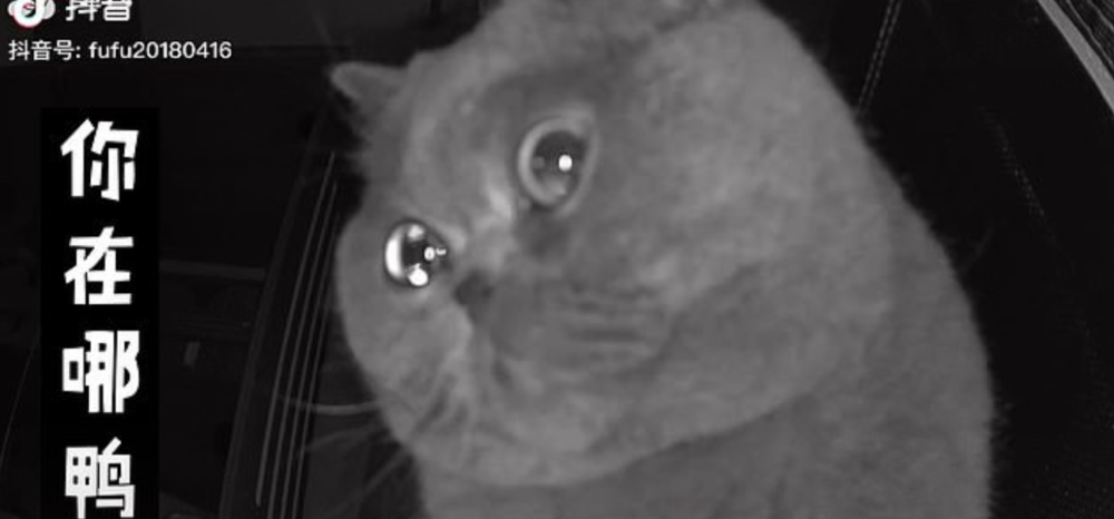 "Pet cat Fu Fu caught ""crying"" into home camera after being home alone 69"