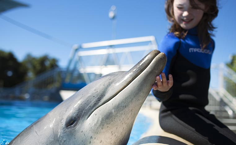 Dolphin shows are banned in New South Wales; ending breeding & importing captive dolphins 56