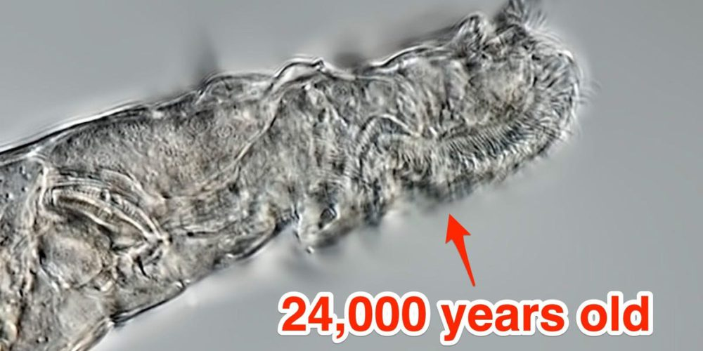 Russian scientists revived 24K y/o worm and it can reproduce without partner 56
